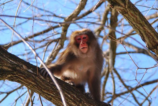 野生の猿に励まされた