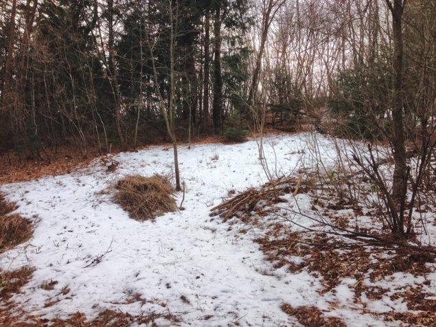 小屋暮らし用の土地